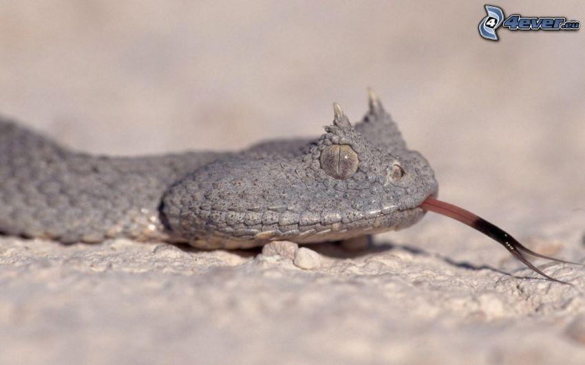 Schlange, hängende Zunge