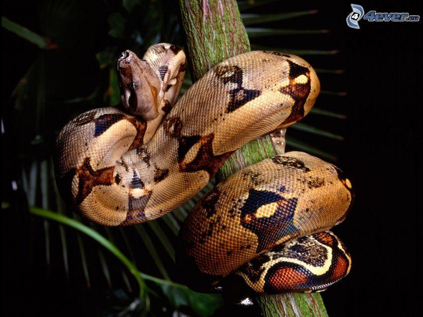 Schlange auf dem Baum, Stamm