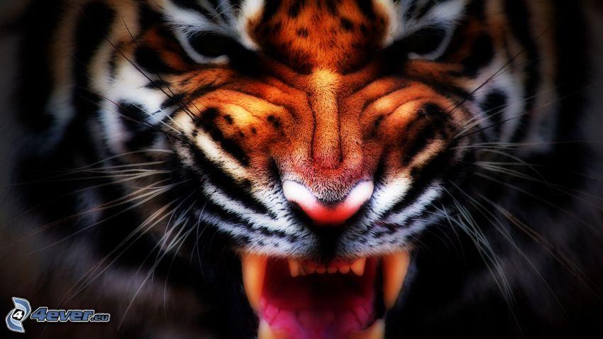 Tiger, Gebrülle