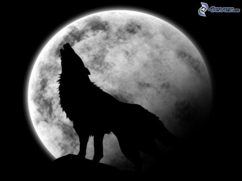 Wolf heult, Mond, Silhouette eines Wolfes