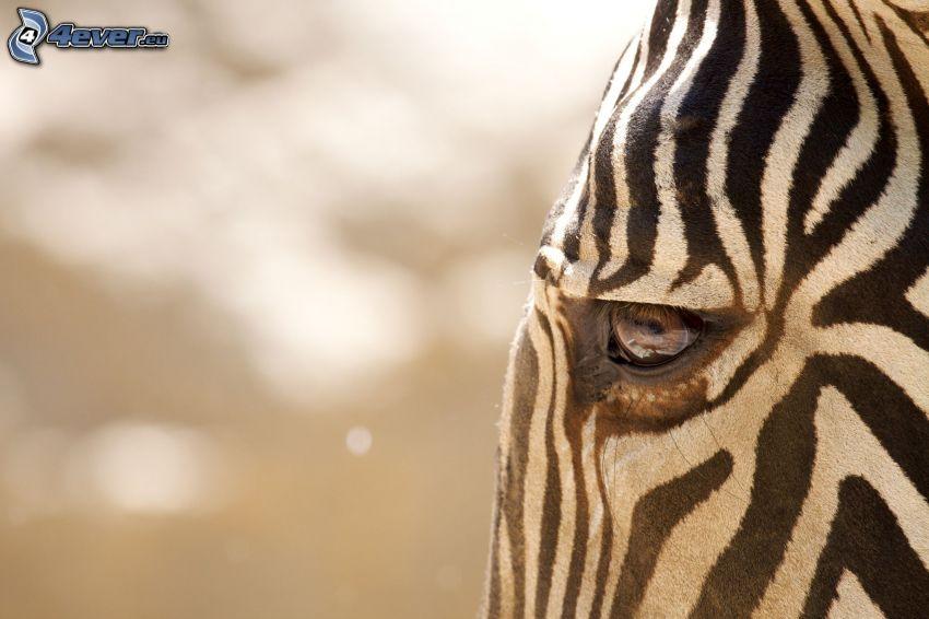 Zebra, Auge