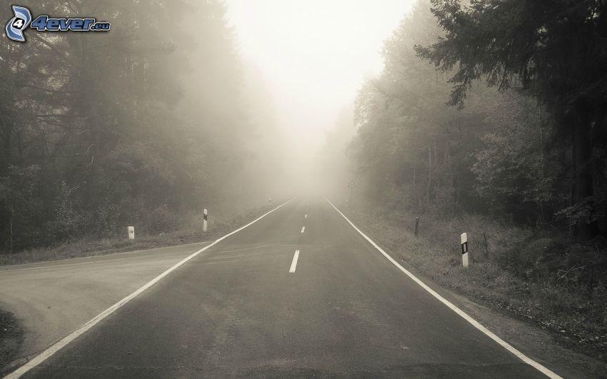 Pfad durch den Wald, gerade Strasse, Nebel