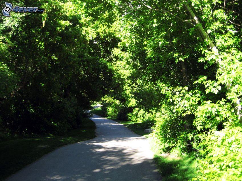 Pfad durch den Wald, Grün