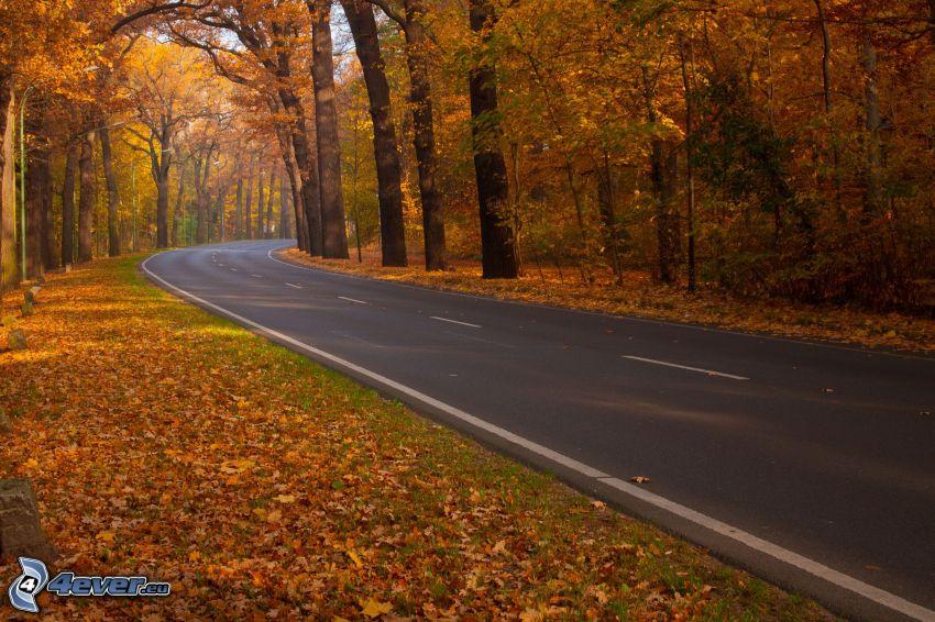Pfad durch den Wald, herbstlicher Wald