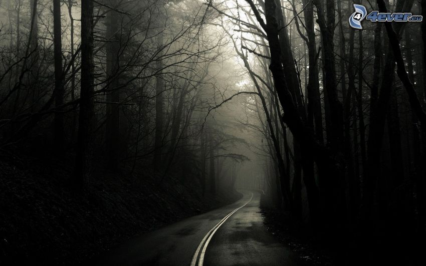 Pfad durch den Wald, Straße, Wald