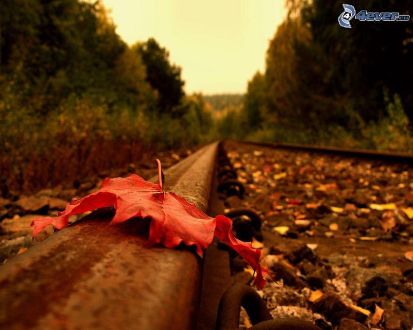 rotes Blatt, alten Schienen, Wald