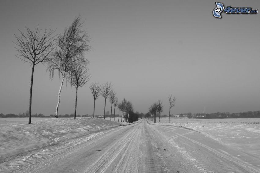 schneebedeckte Straße, Schnee, Bäume
