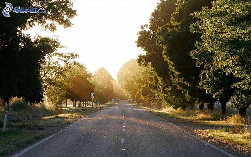 Straße, Allee