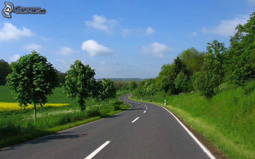 Straße, Bäume, Wiesen