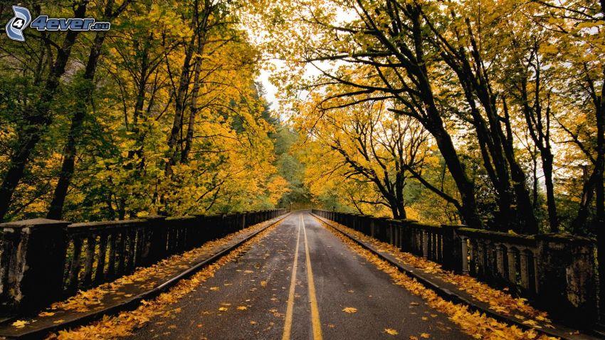 Straße, herbstlicher Wald