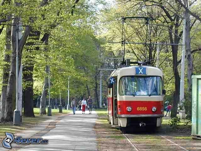 Straßenbahn, Straße, Bäume
