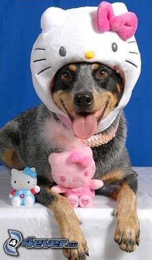gekleideter Hund, Hello Kitty, Kostüm