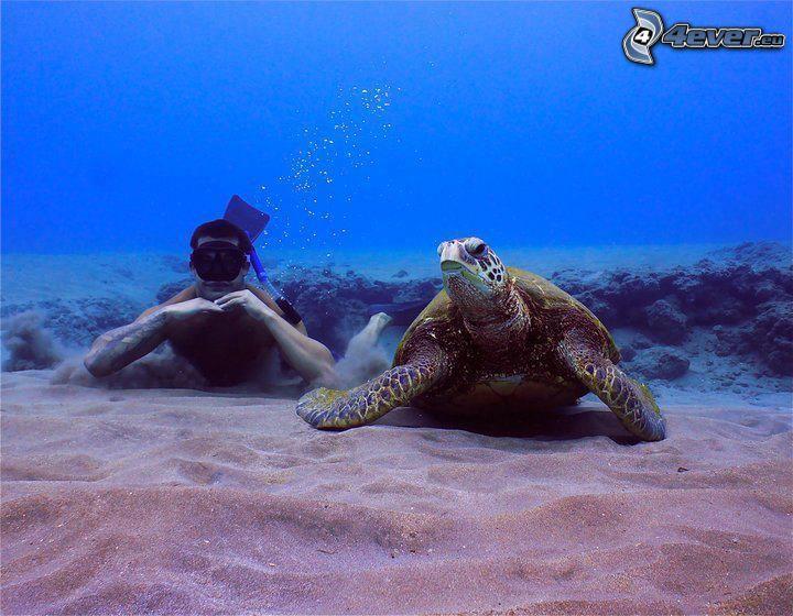 Meeresschildkröte, Taucher, Meeresboden, Sand