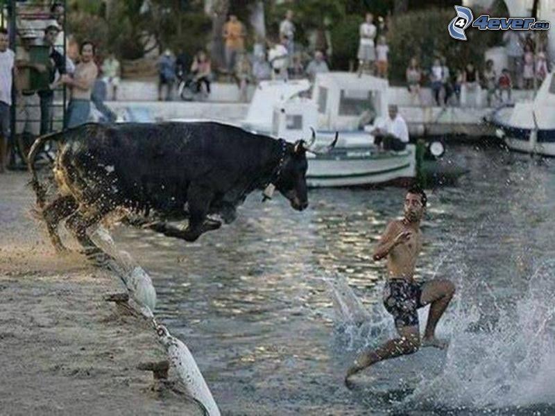 Anschlag, Stier, Wasser, Schnappschuss