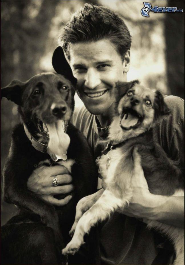 David Boreanaz, Hunde
