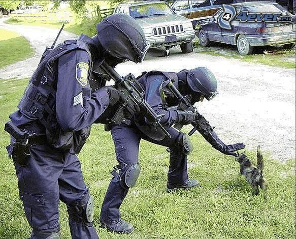 Polizei, Katze