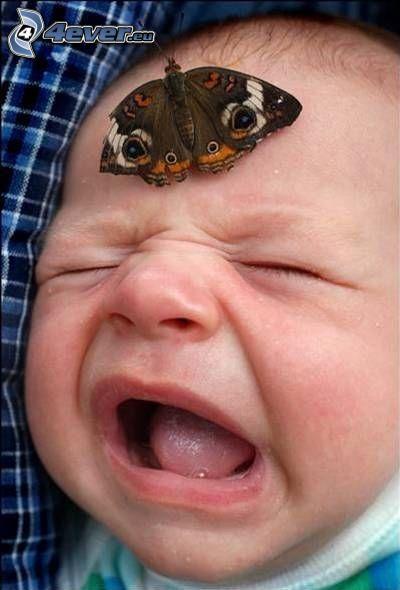 Schmetterling auf der Stirn, weinendes Baby