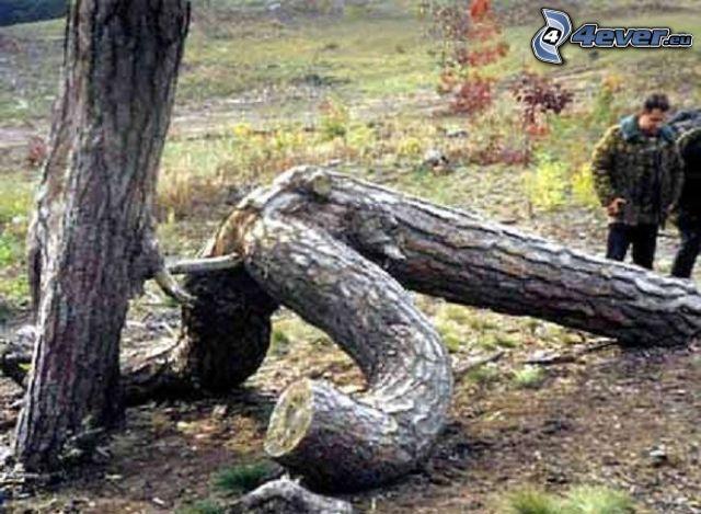 sex, Bäume, Stämme