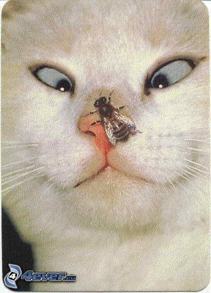 Angst, Katze, Biene