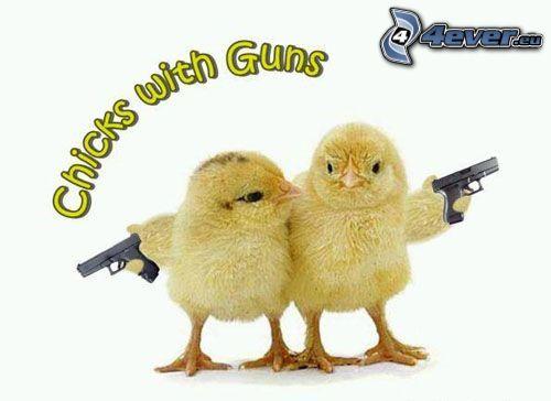 Chicks with guns, Küken, Waffen