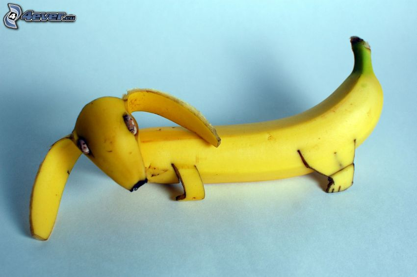 Dackel, Banane