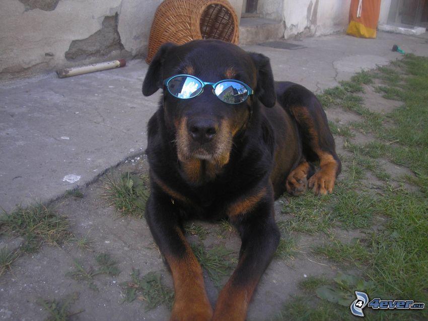 Hund in Gläsern