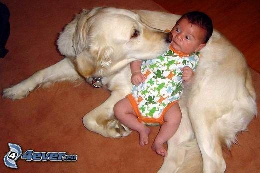Hund und Kind, Baby, Labrador, Angst