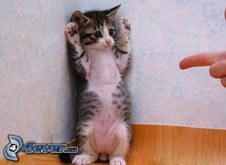 Katze, Angst, Überlauf