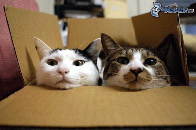 Katzen, Schachtel