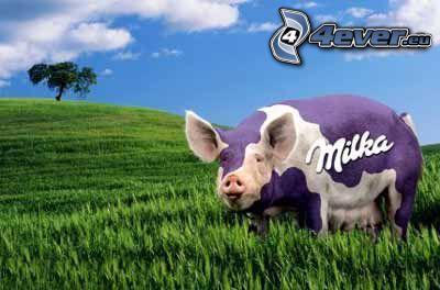 Milka, Schwein, Gras