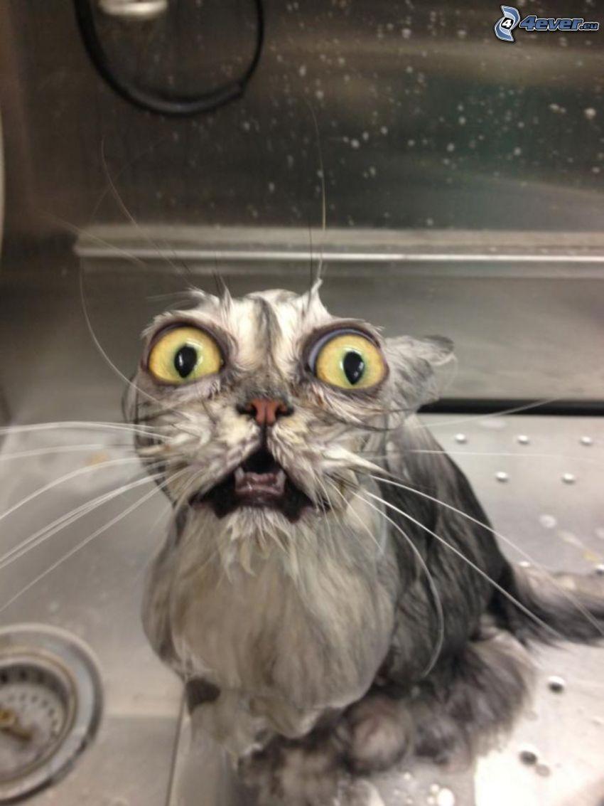 nasse Katze, große Augen, Angst