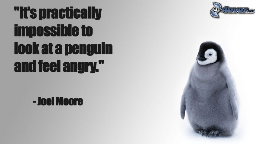 Pinguinküken, Wut, Zitat