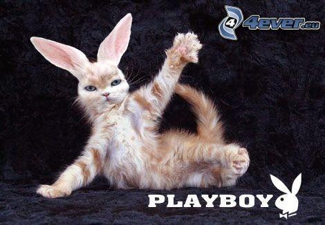 Playboy, Katze, Ohren