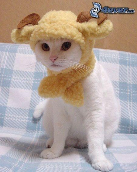 weiße Katze, Schafbock, Kostüm