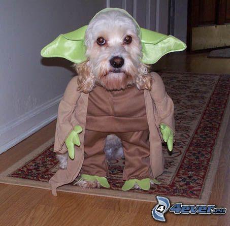 Yoda, Star Wars, gekleideter Hund