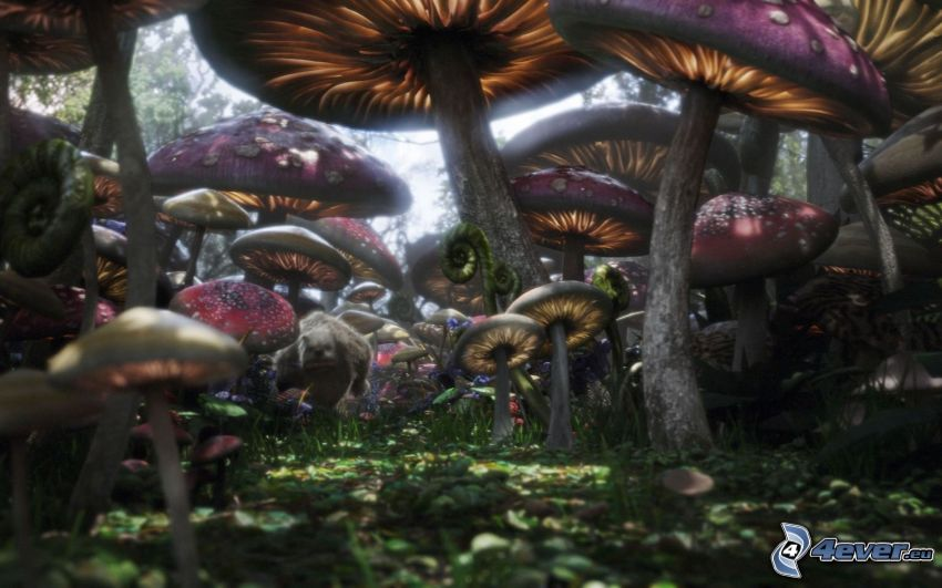Alice im Wunderland, Pilze