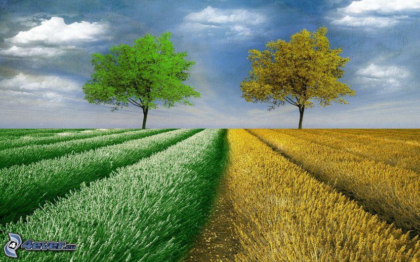 Bäume, Feld