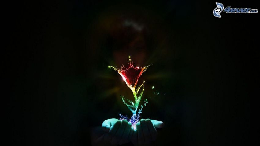 Blütenfarbe, Wasser, Hände