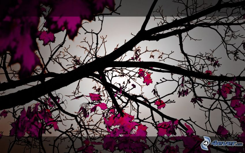 bunte Blätter, Äste, Laubbaum