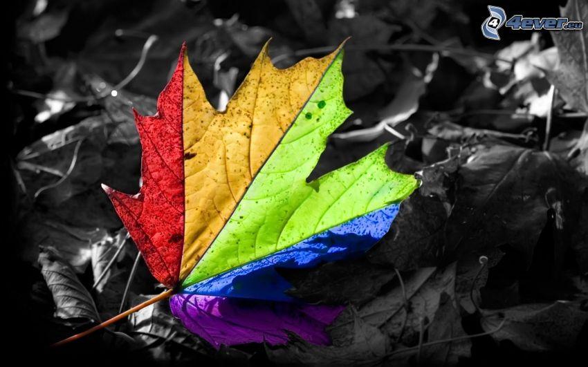 buntes Blatt, Regenbogenfarben