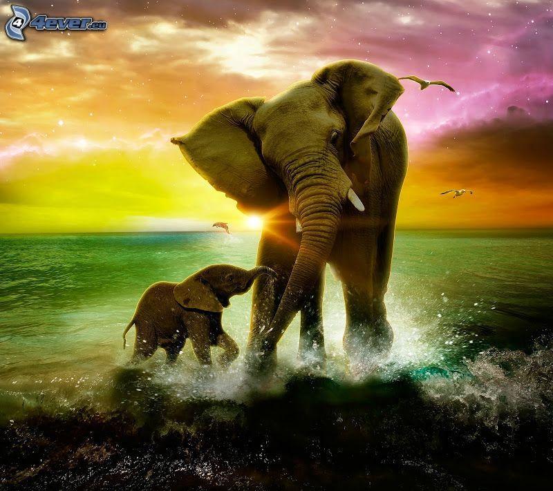 Elefanten, Elefantes Junge, Wasser, farbiger Himmel