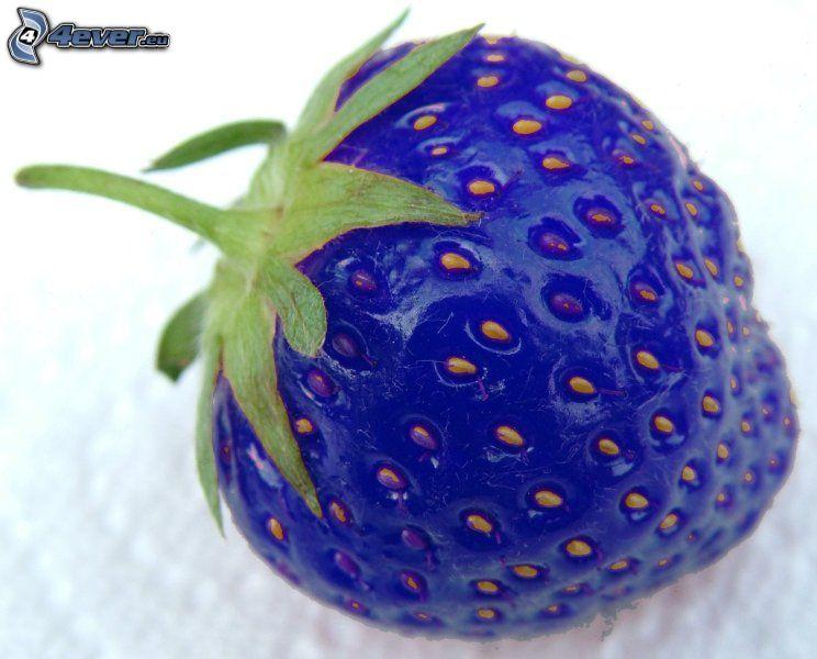 Erdbeere, blau