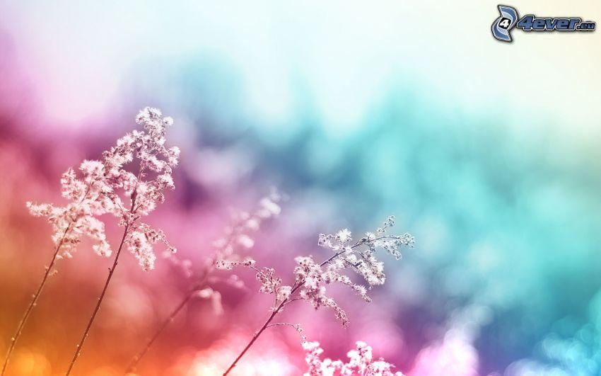 Pflanzen, farbiger Hintergrund