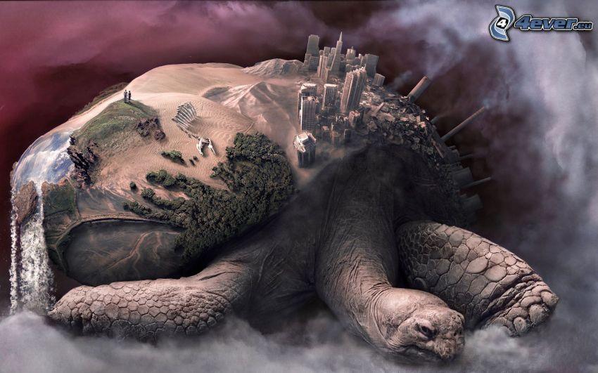 Schildkröte, City, Wüste