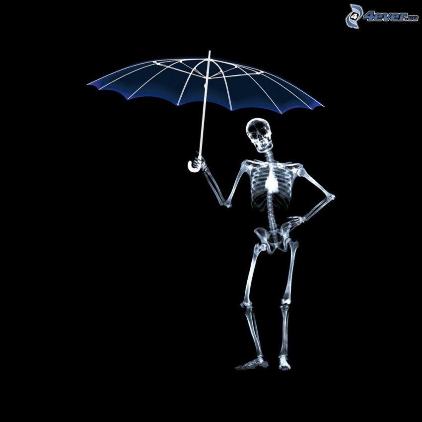 Skelett, Regenschirm