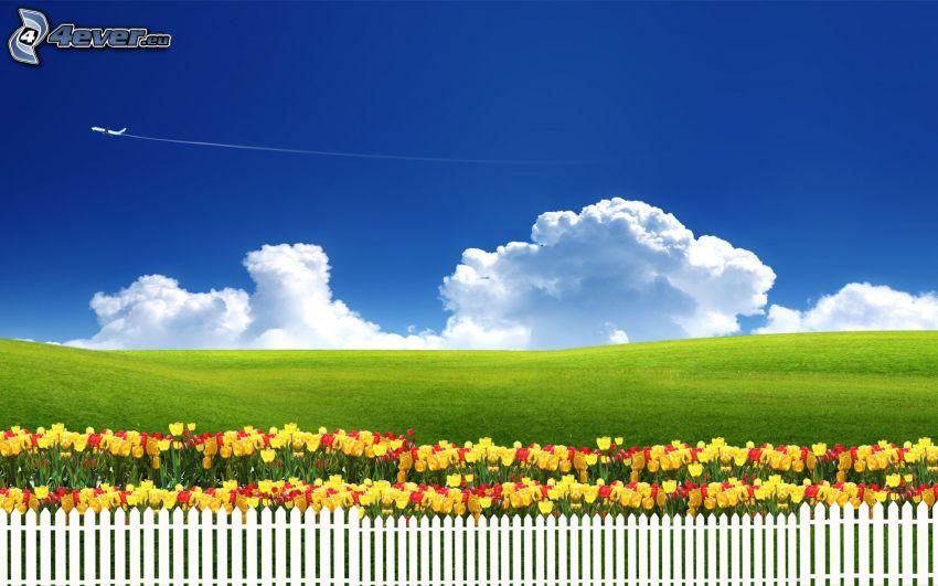 Tulpen, Wiese, Wolken, Zaun, Flugzeug