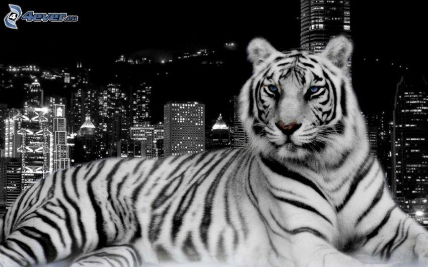 Weiser Tiger, City, Nacht