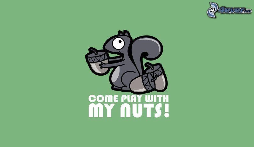 Eichhörnchen, Eichel, text