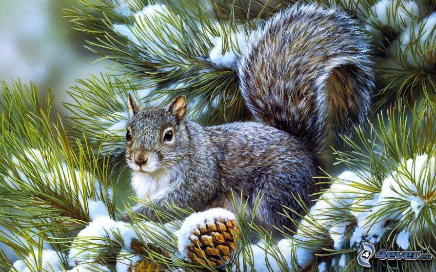 Eichhörnchen auf dem Baum, verschneiter Nadelbaum