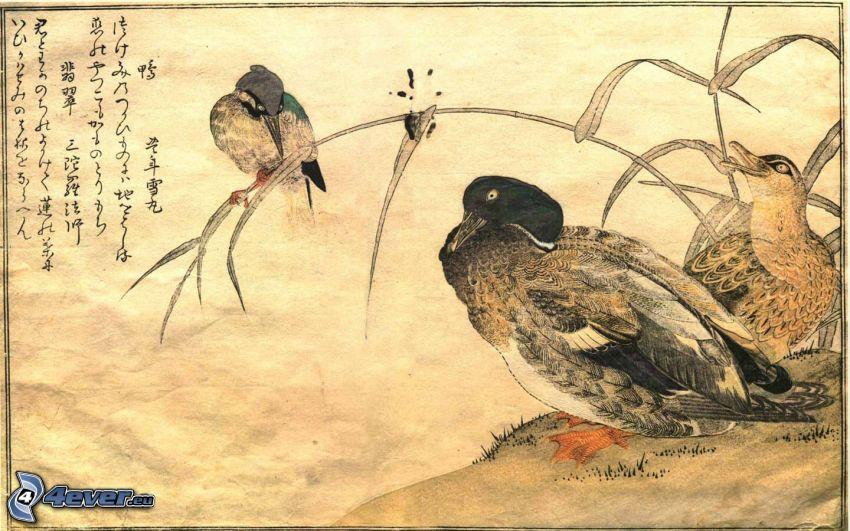 Ente, Vögel